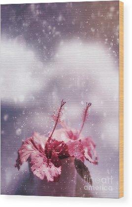 Pretty Pink Poppy Macro Wood Prints