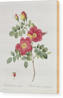 Redoute Wood Prints