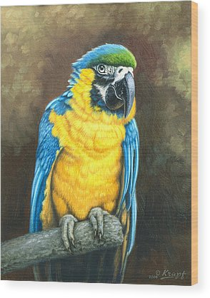 Macaw Wood Prints