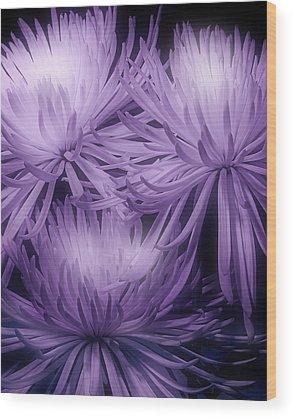 Chrysanthemum Wood Prints