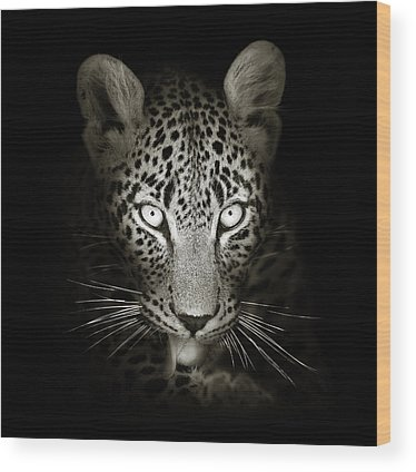 Cat Eyes Wood Prints