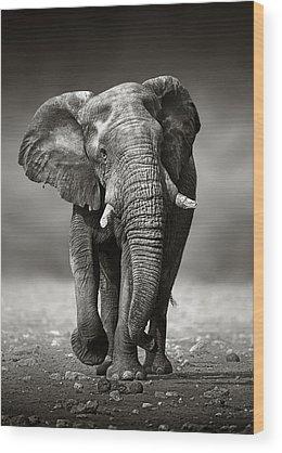 Large Animal Wood Prints