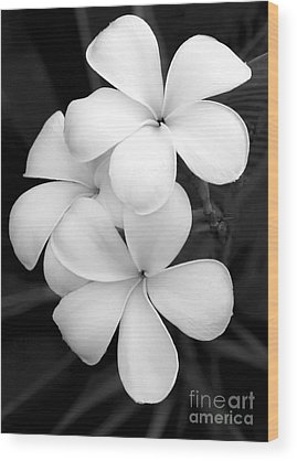 White Moth Wood Prints