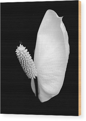 Lily Wood Prints