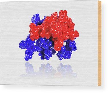 Molecular Biology Wood Prints