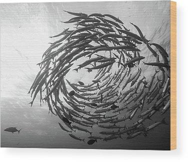 Scuba Diving Wood Prints