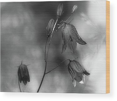 Bluebells Wood Prints