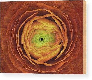 Ranunculus Wood Prints