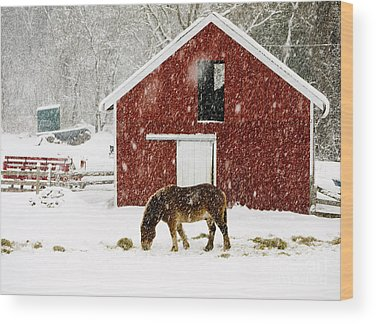 Livestock Wood Prints