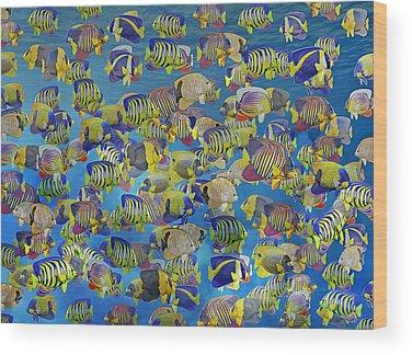 Schooling Fish Wood Prints
