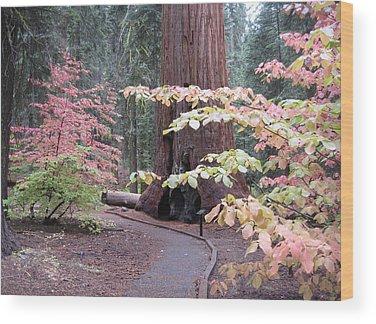 Sierra Wood Prints