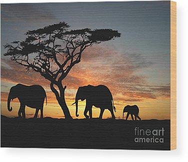 African Bush Elephant Wood Prints
