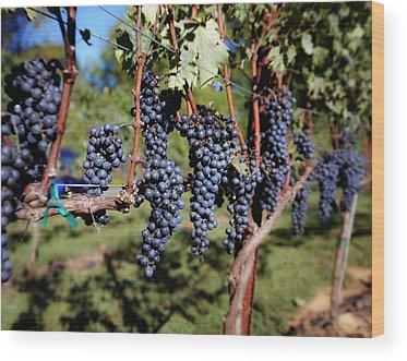 Wine Grapes Wood Prints