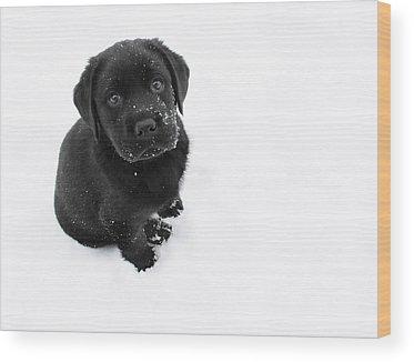 Prairie Dog Wood Prints