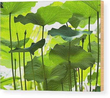 Nelumbo Wood Prints