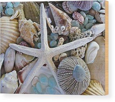 Shells Wood Prints