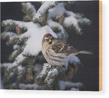 Birds In Winter Wood Prints