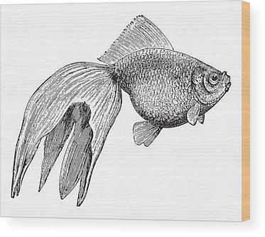 Freshwater Wood Prints