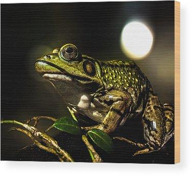 Bullfrogs Wood Prints