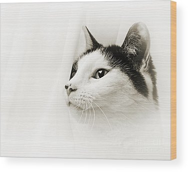Andee Design Feline Wood Prints