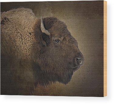 Buffalo Wood Prints