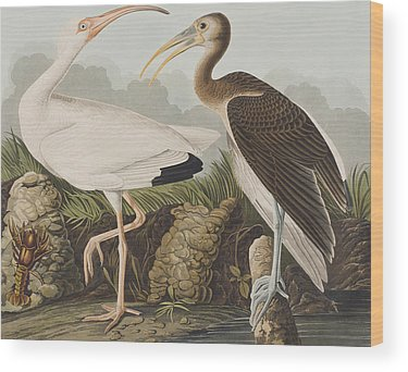 Ibis Wood Prints
