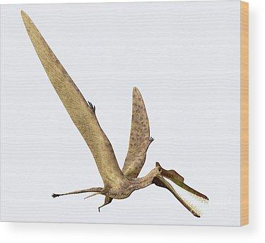 Zhenyuanopterus Wood Prints
