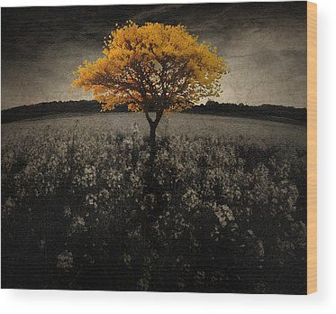Epic Amazing Colors Landscape Digital Modern Still Life Trees Warm Natural Wood Prints