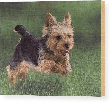Yorkshire Terrier Wood Prints