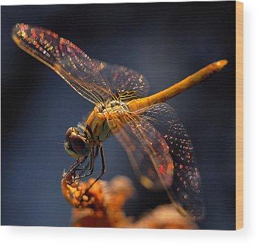 Dragonflies Wood Prints