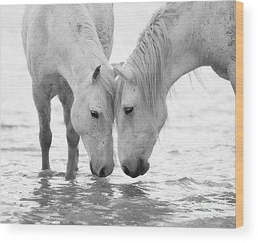 Black And White Horse Wood Prints