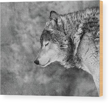 Wolves Wood Prints