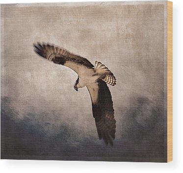 Ospreys Wood Prints