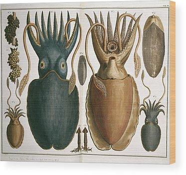 1665 Wood Prints