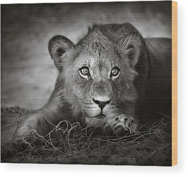 Panthera Wood Prints