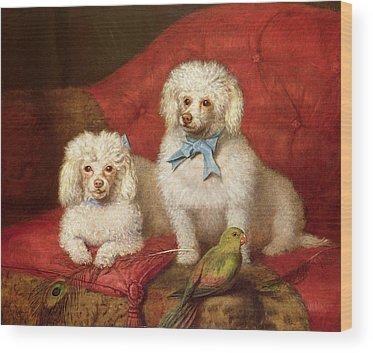 Poodle Wood Prints