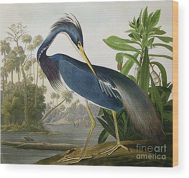 Louisiana Wood Prints