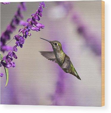 Allens Hummingbird Wood Prints