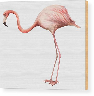 Designs Similar to Flamingo by Anonymous