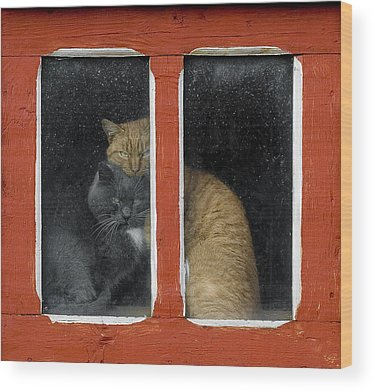 Windows Wood Prints