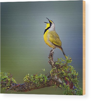 African Bird Photographs Wood Prints