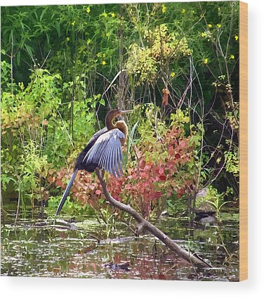 Anhinga Wood Prints
