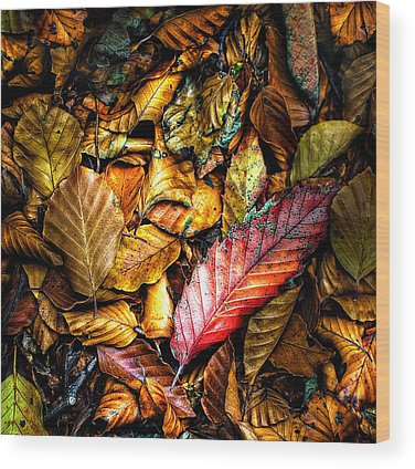 Leaf Litter Wood Prints