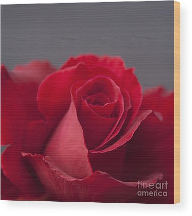 Rose Of Sharon Wood Prints
