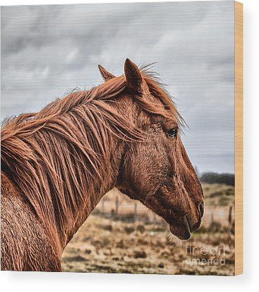 Beautiful Horse Wood Prints