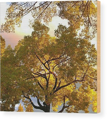 Sundown Wood Prints