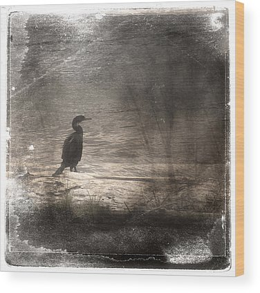 Cormorant Wood Prints