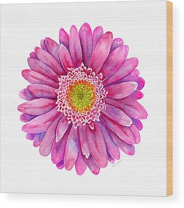 Pink Daisy Wood Prints