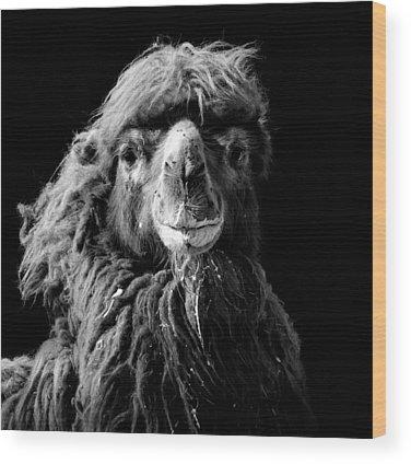 Zoos Wood Prints