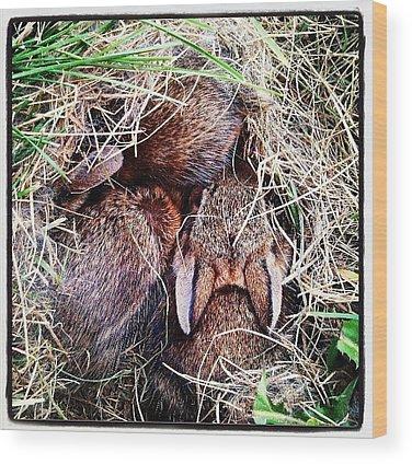Wildlife Wood Prints